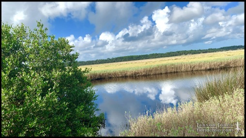 Bulow Creek State Park; Volusia county, Florida (31 August 2019).