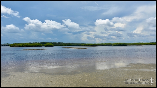 Spruce Creek Park Area; Volusia county, Florida (07 August 2019).