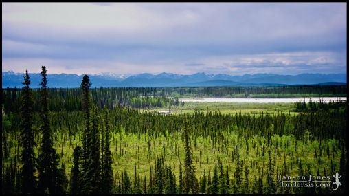 Tetlin National Wildlife Refuge, photographed in Southeast Fairbanks Census Area, Alaska (01 June 2011). Day 02 of the 2011 Roadtrip from Alaska to Florida (Mile 0699 of 7221).
